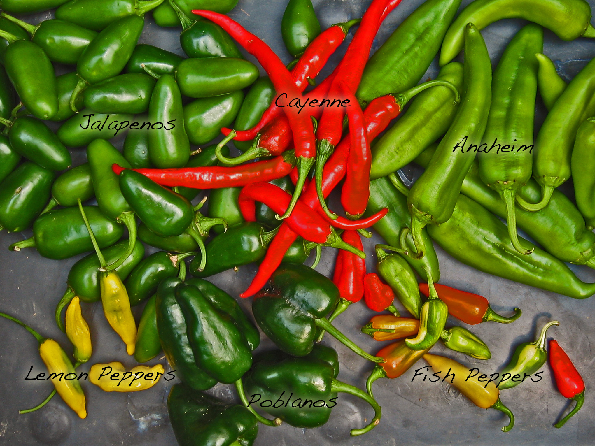 hot-peppers-trend-junky