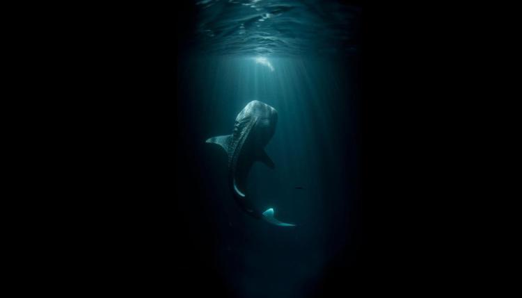 Šādu pārsteigumu lecot iekšā ūdenī, ne?