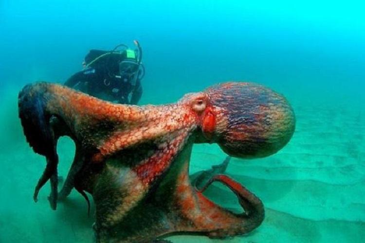 """""""mazais"""" astoņkājis.."""